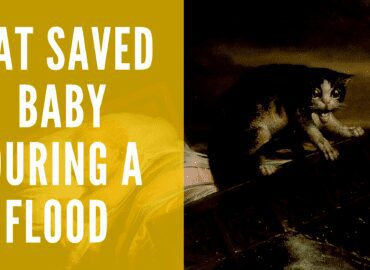 a cat saved life of a baby